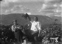 Coppia di contadini durante la vendemmia
