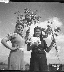 Contadine con piante di cotone in mano