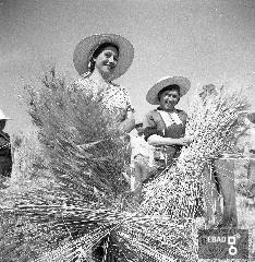 Contadine durante la raccolta di fieno